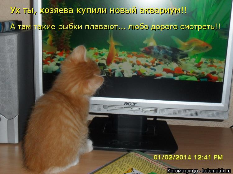 Котоматрица: Ух ты, хозяева купили новый аквариум!! А там такие рыбки плавают... любо дорого смотреть!!