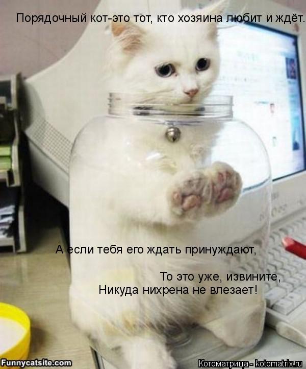 Котоматрица: Порядочный кот-это тот, кто хозяина любит и ждёт. А если тебя его ждать принуждают, То это уже, извините, Никуда нихрена не влезает!