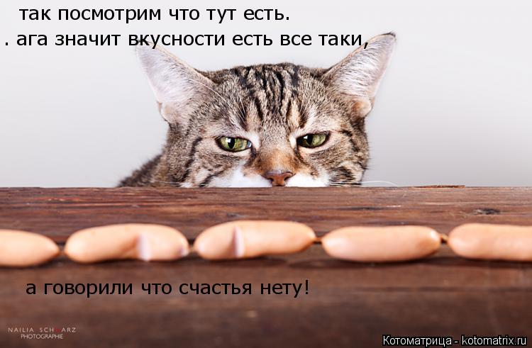 Котоматрица: так посмотрим что тут есть.  . ага значит вкусности есть все таки,   а говорили что счастья нету!