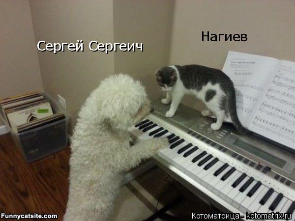 Котоматрица: Сергей Сергеич Нагиев