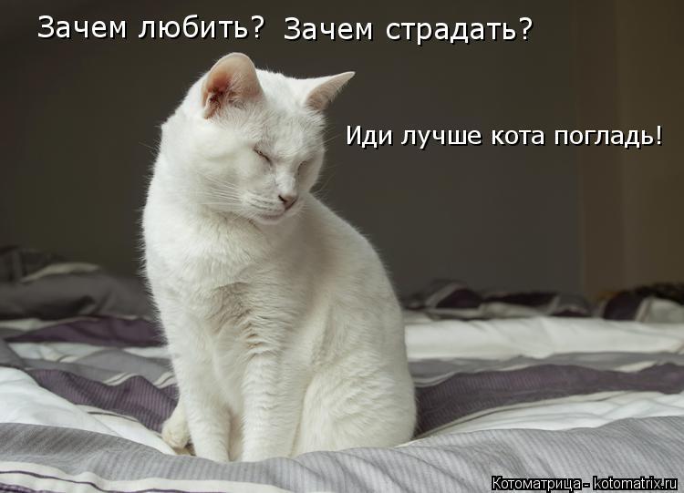 Котоматрица: Зачем любить? Зачем страдать? Иди лучше кота погладь!