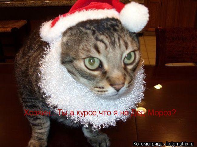 Котоматрица: Хозяин...Ты в курсе,что я не Дед Мороз?