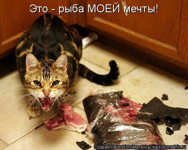 Котоматрица: Это - рыба МОЕЙ мечты!