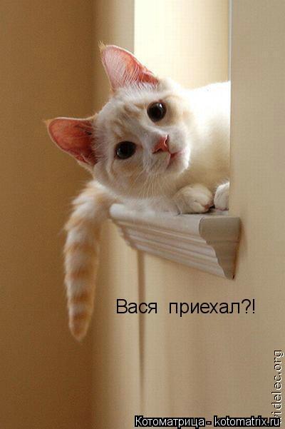 Котоматрица: Вася  приехал?!