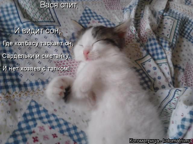 Котоматрица: Вася спит,  И видит сон,  Где колбасу таскает он,  Сардельки и сметанку,  И нет хозяев с тапком!