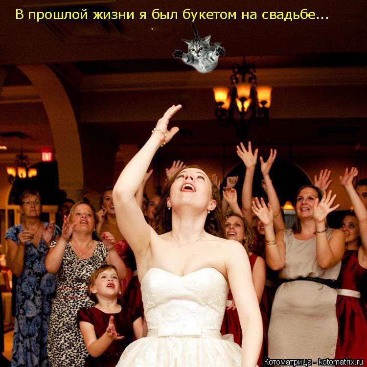 Котоматрица: В прошлой жизни я был букетом на свадьбе...