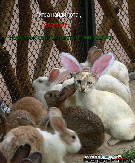 """Котоматрица: """"игра найди кота,, подсказка -Некоторые котЭ считают что они кролики"""