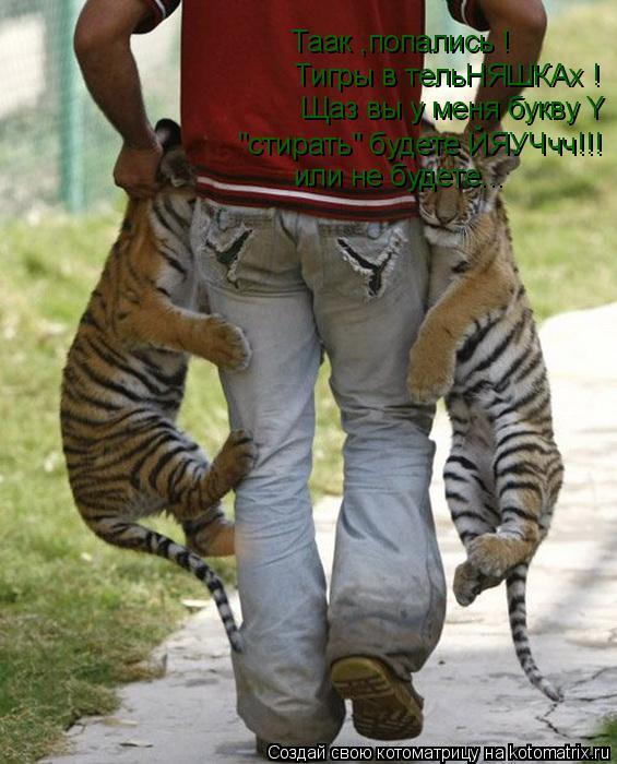 """Котоматрица: Тигры в тельНЯШКАх ! Щаз вы у меня букву Y Таак ,попались ! """"стирать"""" будете ЙЯУЧчч!!!  или не будете..."""