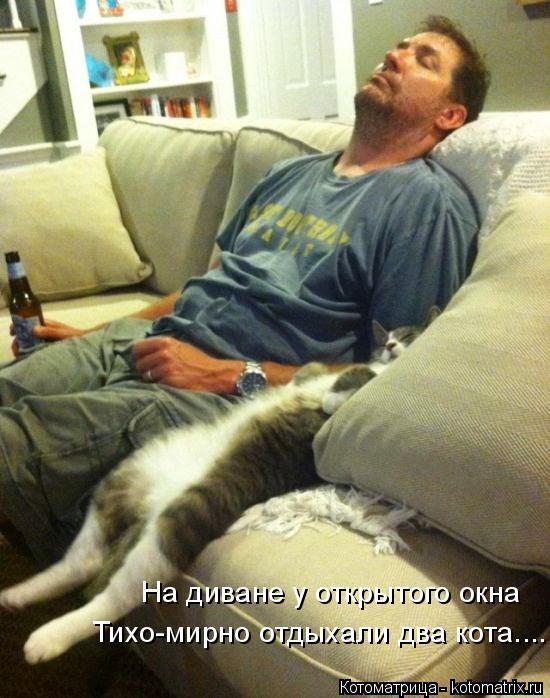 Котоматрица: На диване у открытого окна Тихо-мирно отдыхали два кота....