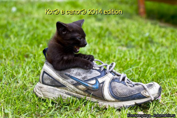 Котоматрица: КотЭ в сапогЭ 2014 edition КотЭ в сапогЭ 2014 edition