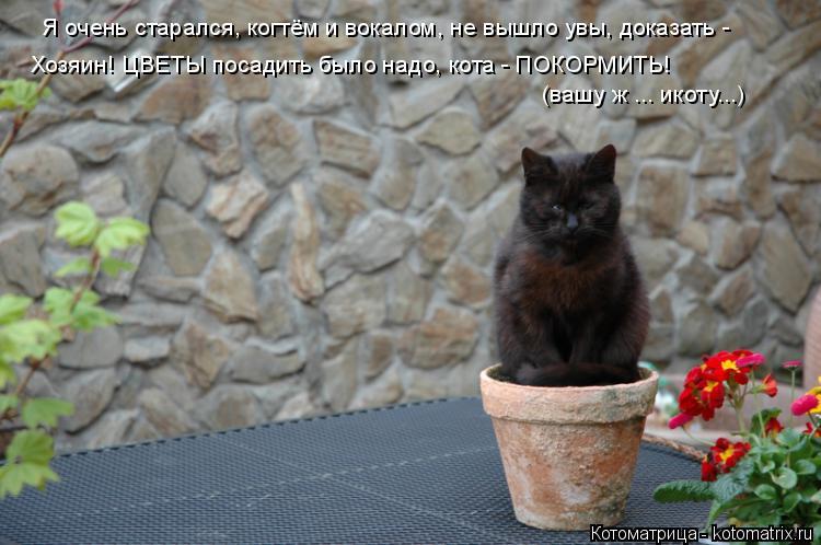 Котоматрица: Я очень старался, когтём и вокалом, не вышло увы, доказать -  Хозяин! ЦВЕТЫ посадить было надо, кота - ПОКОРМИТЬ!  (вашу ж ... икоту...)