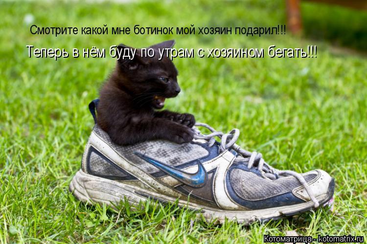 Котоматрица: Смотрите какой мне ботинок мой хозяин подарил!!! Смотрите какой мне ботинок мой хозяин подарил!!! Теперь в нём буду по утрам с хозяином бегат
