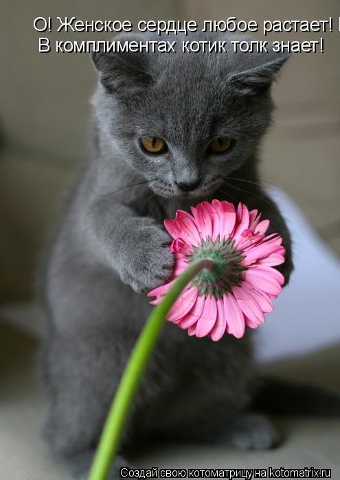 Котоматрица: О! Женское сердце любое растает! В комплиментах котик толк знает!   В комплиментах котик толк знает!