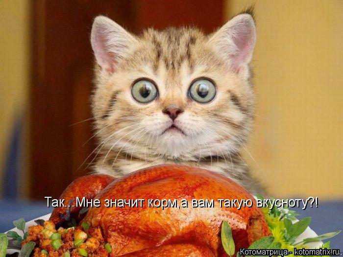 Котоматрица: Так...Мне значит корм,а вам такую вкусноту?!