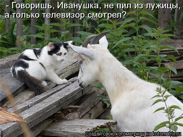 Котоматрица: - Говоришь, Иванушка, не пил из лужицы, а только телевизор смотрел?