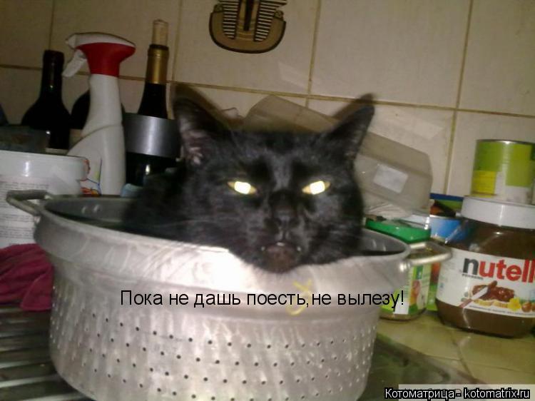 Котоматрица: Пока не дашь поесть,не вылезу!