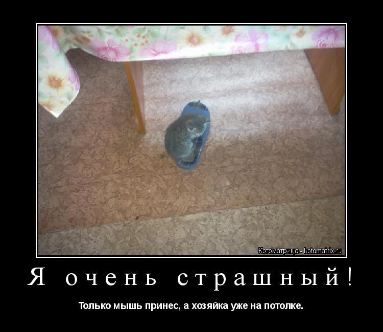 Котоматрица: Я очень страшный! Только мышь принес, а хозяйка уже на потолке.