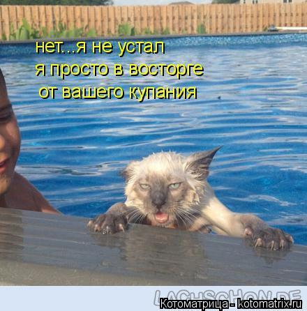 Котоматрица: нет...я не устал я просто в восторге  от вашего купания