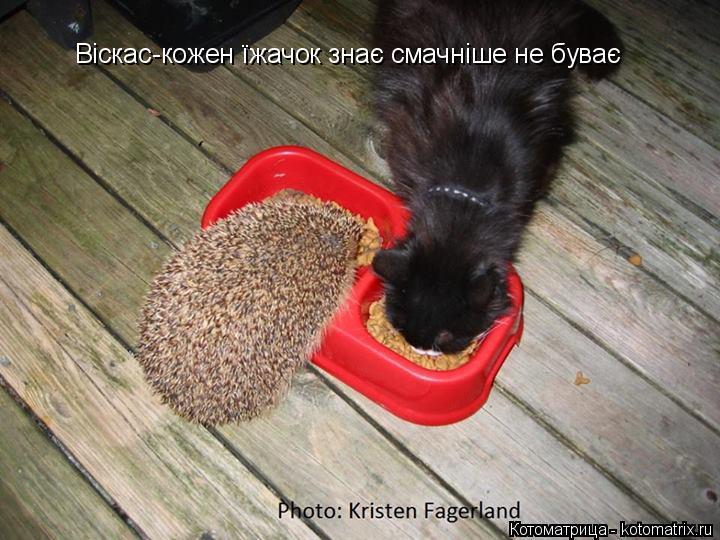 Котоматрица: Віскас-кожен їжачок знає смачніше не буває