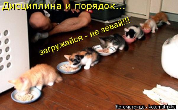 Котоматрица: загружайся - не зевай!!! Дисциплина и порядок...
