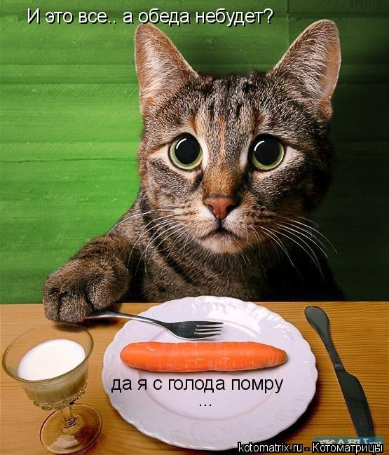 Котоматрица: И это все.. а обеда небудет? да я с голода помру ... ...