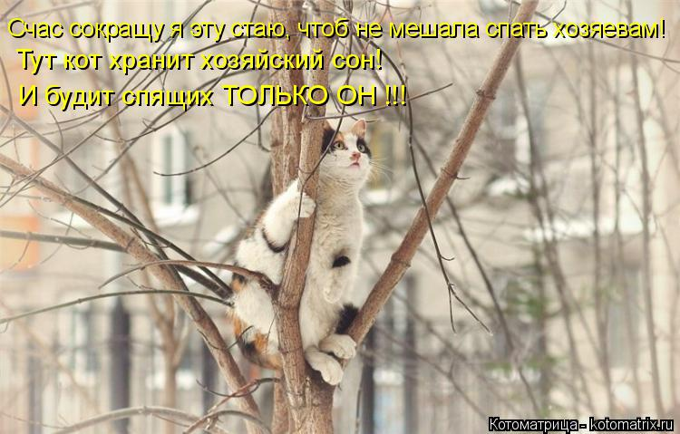 Котоматрица: Счас сокращу я эту стаю, чтоб не мешала спать хозяевам! Тут кот хранит хозяйский сон! И будит спящих ТОЛЬКО ОН !!!