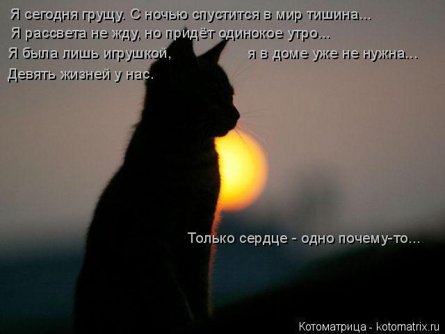 Котоматрица: Я сегодня грущу. С ночью спустится в мир тишина... Я рассвета не жду, но придёт одинокое утро... Я была лишь игрушкой,                  я в доме уже не н