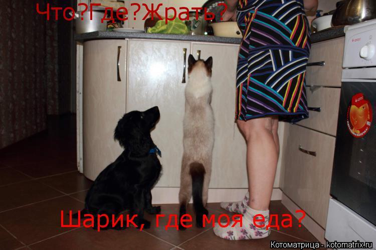 Котоматрица: Что?Где?Жрать? Шарик, где моя еда?