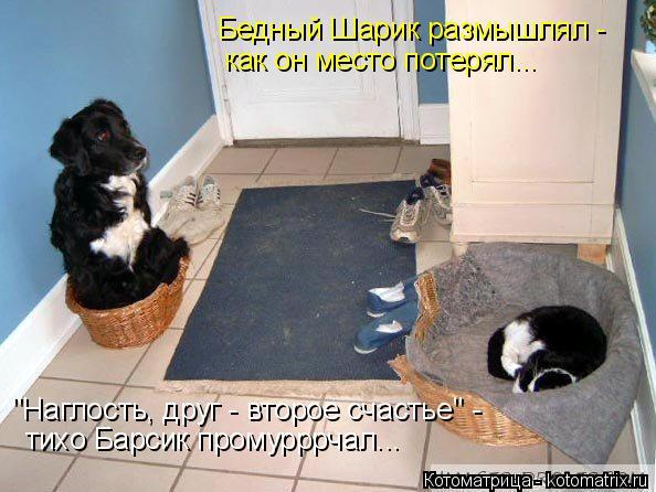 """Котоматрица: Бедный Шарик размышлял - как он место потерял... """"Наглость, друг - второе счастье"""" - тихо Барсик промурррчал..."""