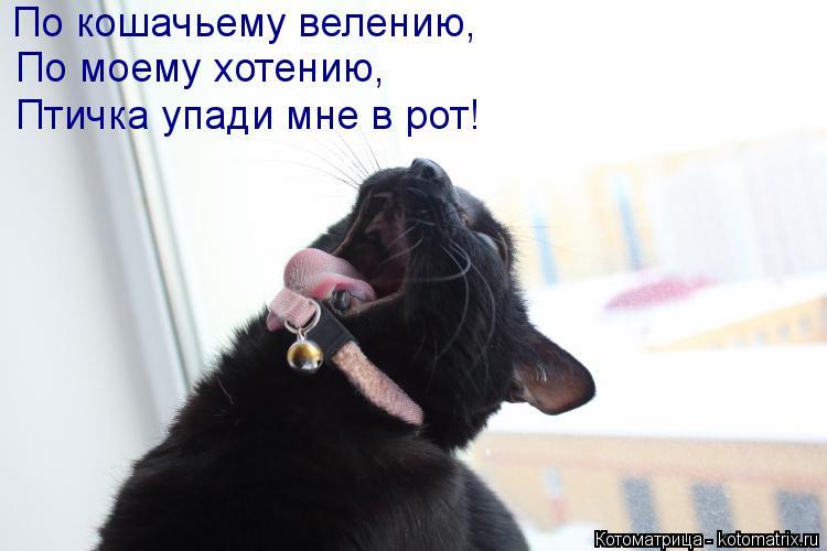 Котоматрица: По кошачьему велению, По моему хотению, Птичка упади мне в рот!