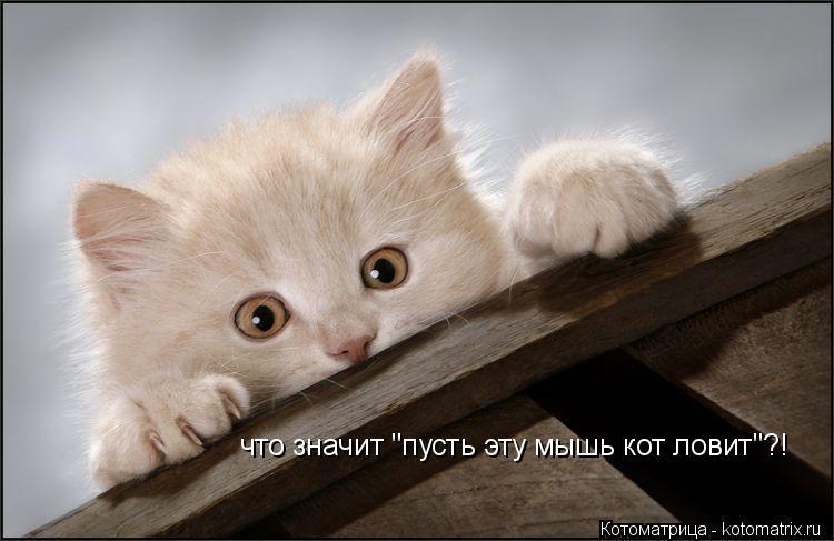 http://kotomatrix.ru/images/lolz/2014/01/08/kotomatritsa_aA.jpg