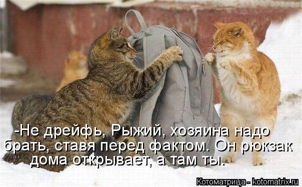Котоматрица: -Не дрейфь, Рыжий, хозяина надо брать, ставя перед фактом. Он рюкзак  дома открывает, а там ты.