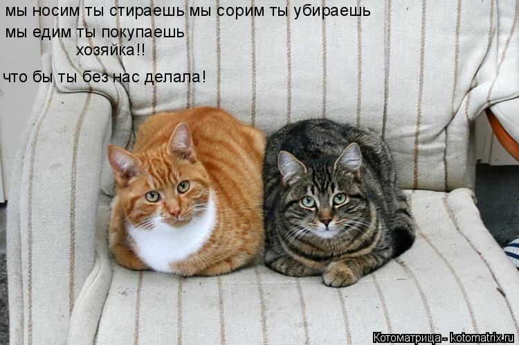 Котоматрица: мы носим ты стираешь мы сорим ты убираешь  мы едим ты покупаешь  хозяйка!! что бы ты без нас делала!