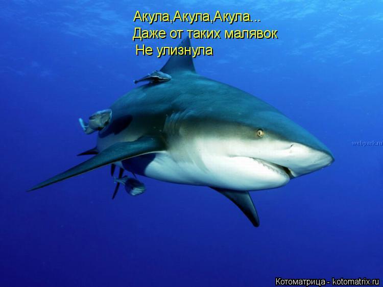 Котоматрица: Акула,Акула,Акула... Даже от таких малявок  Не улизнула