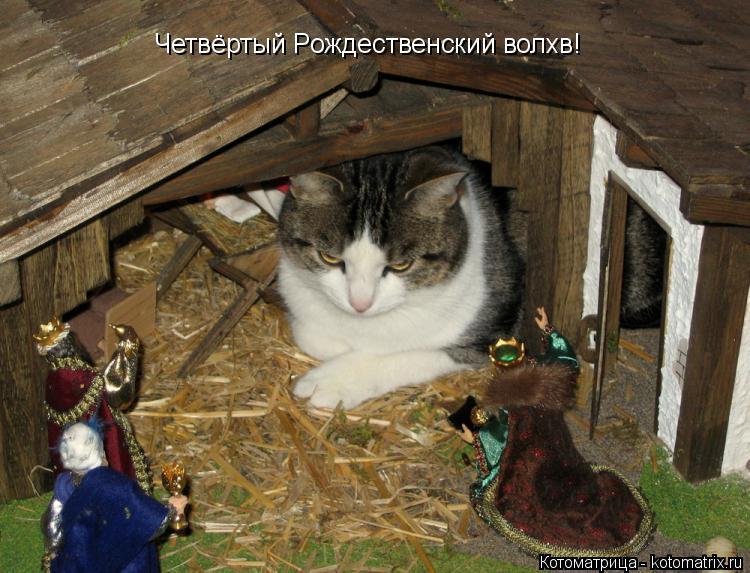 Котоматрица: Четвёртый Рождественский волхв!