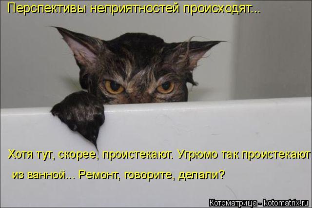 Котоматрица: Перспективы неприятностей происходят... Хотя тут, скорее, проистекают. Угрюмо так проистекают из ванной... Ремонт, говорите, делали?