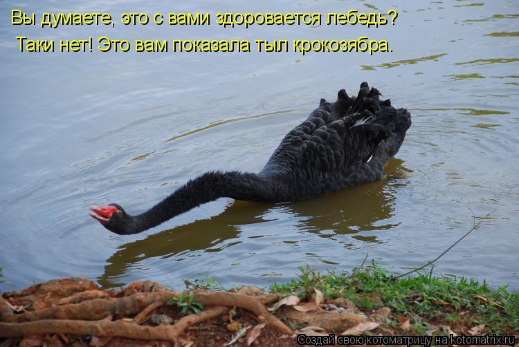 Котоматрица: Вы думаете, это с вами здоровается лебедь? Таки нет! Это вам показала тыл крокозябра.