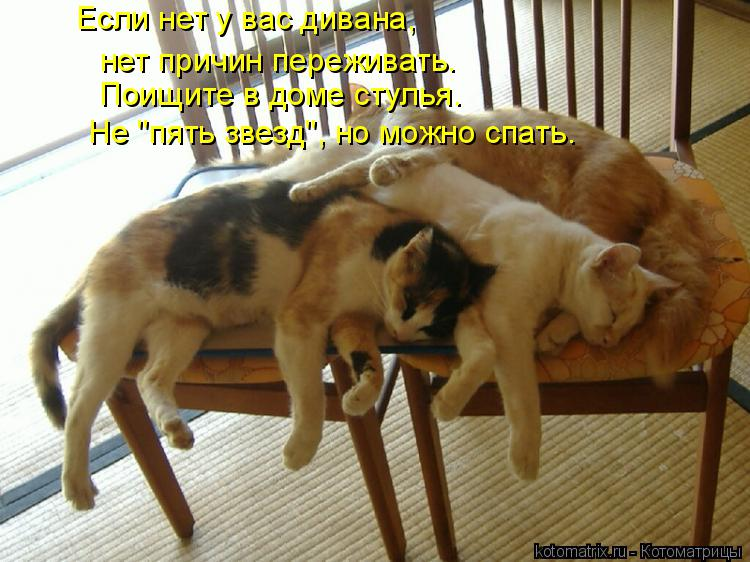 """Котоматрица: Если нет у вас дивана, нет причин переживать. Поищите в доме стулья. Не """"пять звезд"""", но можно спать."""
