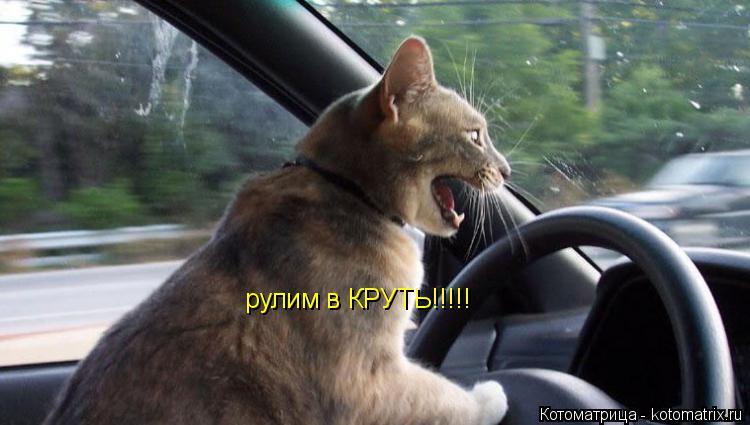 Котоматрица: рулим в КРУТЬ!!!!!