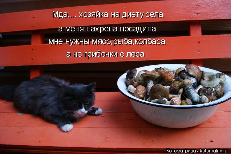 Котоматрица: Мда.... хозяйка на диету села  а меня нахрена посадила мне нужны мясо,рыба,колбаса а не грибочки с леса