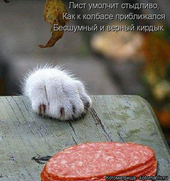Котоматрица: Лист умолчит стыдливо, Как к колбасе приближался Бесшумный и верный кирдык.