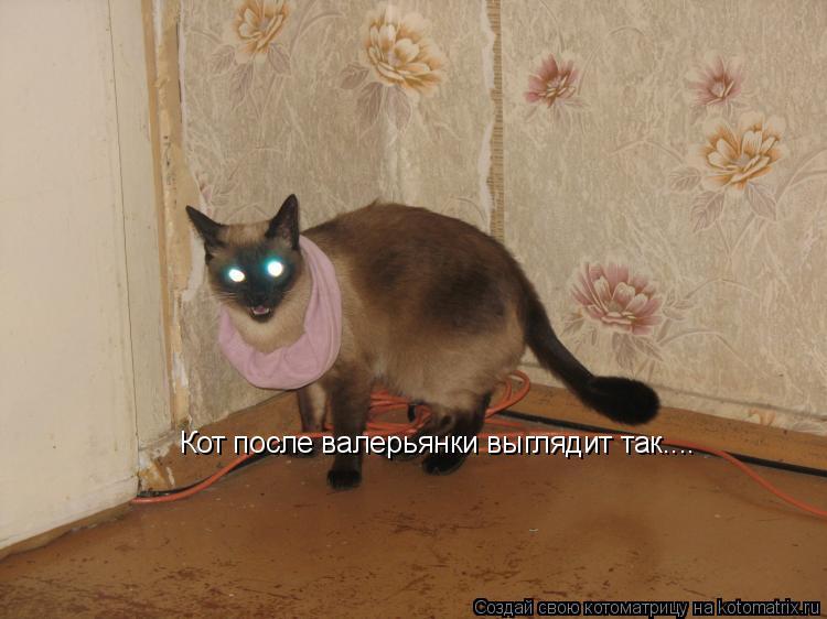 Котоматрица: Кот после валерьянки выглядит так....