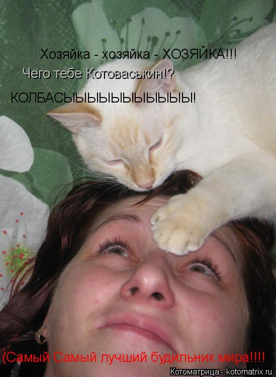 Котоматрица: Хозяйка - хозяйка - ХОЗЯЙКА!!! КОЛБАСЫЫЫЫЫЫЫЫЫЫЫ! (Самый Самый лучший будильник мира!!!! Чего тебе Котоваськин!?