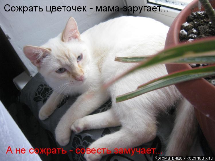 Котоматрица: Сожрать цветочек - мама заругает... А не сожрать - совесть замучает...