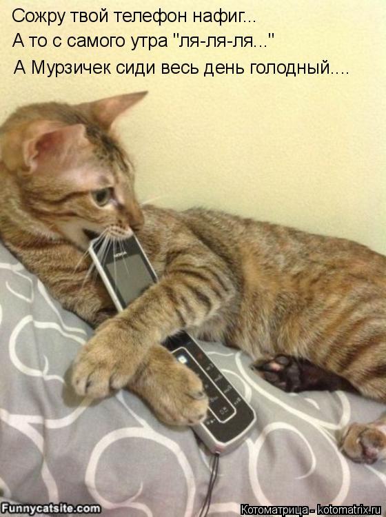 """Котоматрица: Сожру твой телефон нафиг... А то с самого утра """"ля-ля-ля..."""" А Мурзичек сиди весь день голодный...."""