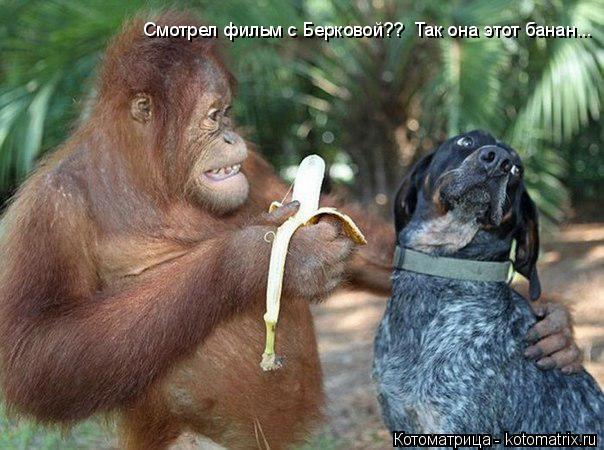 Котоматрица: Смотрел фильм с Берковой??  Так она этот банан...