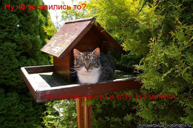 Котоматрица: Ну чё уставились то? Это котово место и коту тут можно...