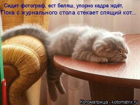 Котоматрица: Пока с журнального стола стекает спящий кот... Сидит фотограф, ест беляш, упорно кадра ждёт,