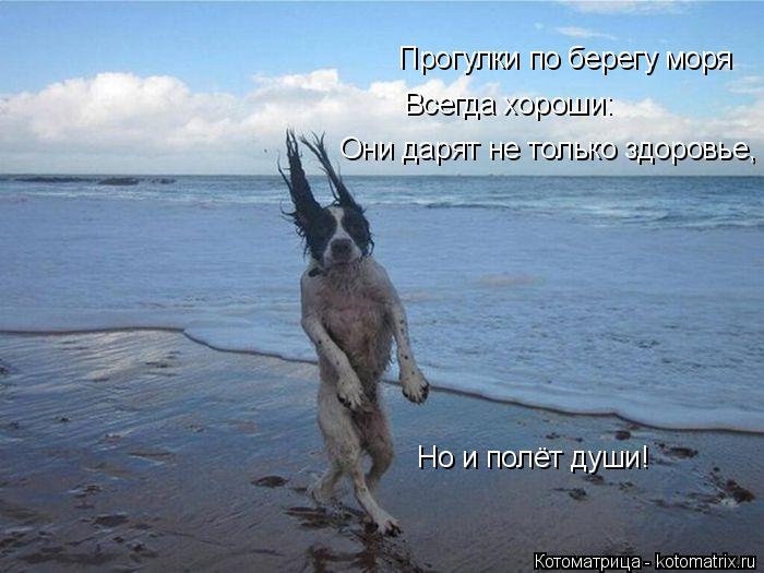 Котоматрица: Прогулки по берегу моря Всегда хороши: Они дарят не только здоровье, Но и полёт души!