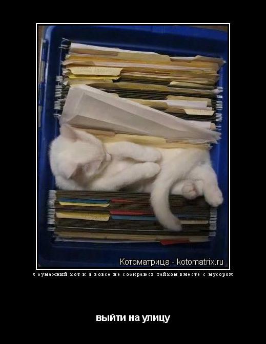 Котоматрица: я бумажный кот и я вовсе не собираюсь тайком вместе с мусором выйти на улицу